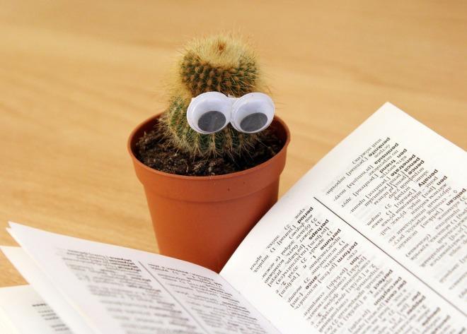 Kuva: kaktus sanakirjan äärellä